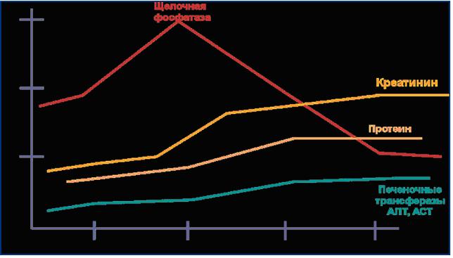 Динамика изменения  биохимических показателей в крови молодых животных